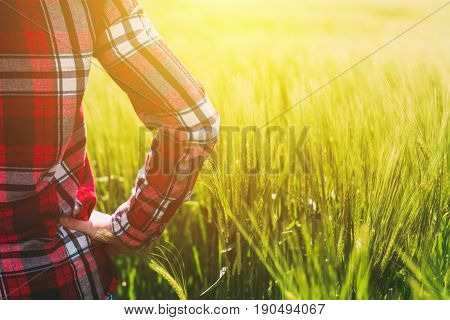 Female farmer looking at the sun on the horizon over cultivated wheat crops field selective focus