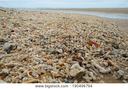Sandy beach cluttered with several kinds of dead corals. They died due to the increase of pollutants after the urbanization of the coastal areas, increased water temperature and acidity.