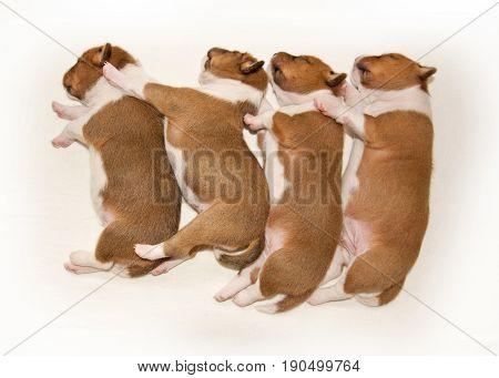 puppies sleeping on the light bed. Animals.
