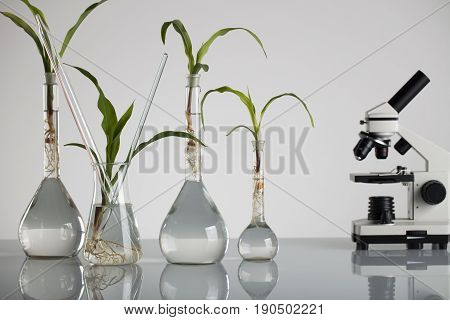 Plants in laboratory. Biotechnolgy concept. White bacground and glass table.
