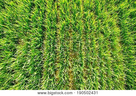 top view to fresh spring green field pure nature concept