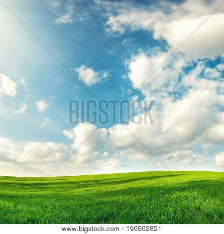field of fresh spring grass under perfect sky nature background concept
