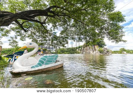 Swan boat landing in the lake next to the shade of a very ancient tree