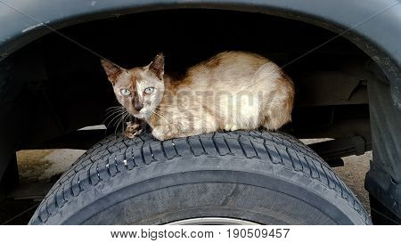 Cat on the wheel under the mudguard