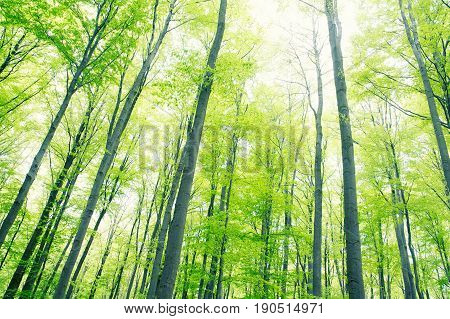 view to tree crown in instant photo style nature background concept