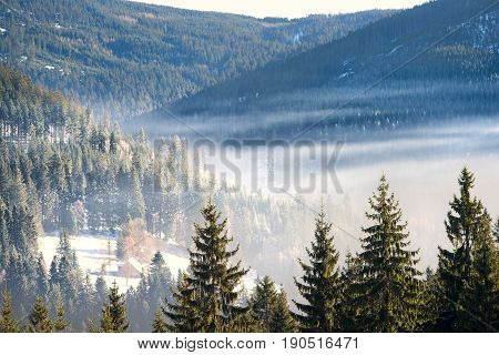 Forest mountain with the conifer trees and mountain cottage in mist