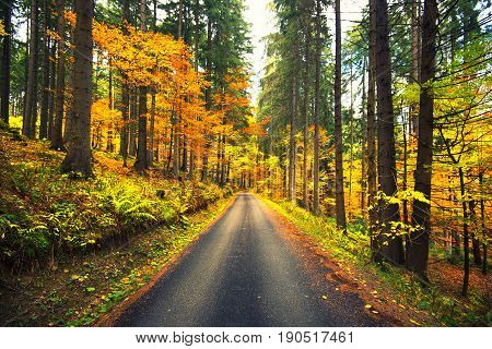 Autumn scene with straight road in forest