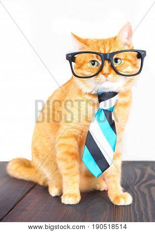 Cute red cat with glasses and a tie sitting on a table in the studio.