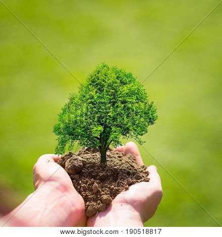 tree in hands planting tree eco nature concept