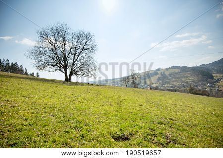 Green field with lone tree early spring nature