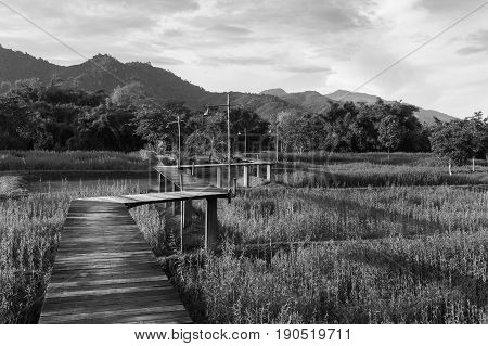 Black and White Zigzag wooden walking path over rice field nautral landscape background
