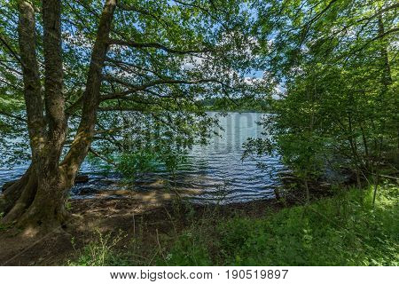 Lake Side Inside Of A Wood Forest With Trees And Ripples Waves On The Water. Maars Vulcan In Germany