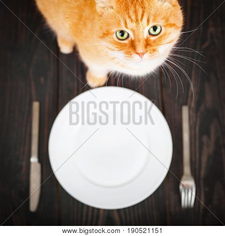 Hungry cat near an empty plate and cutlery on a wooden table