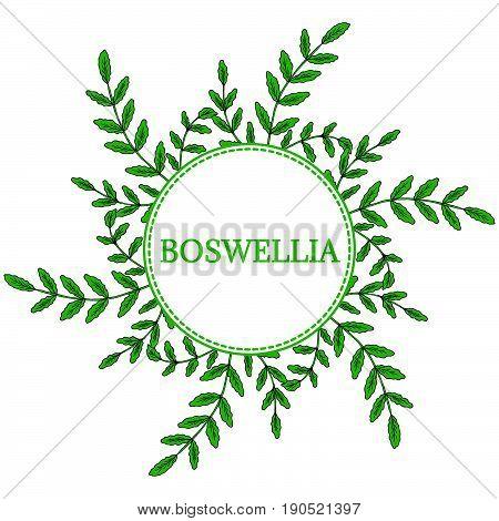 Indian Frankincense Salai or Boswellia serrata vintage illustration round frame.Olibanum-tree (Boswellia sacra) aromatic tree. Ink hand drawn herbal illustration.