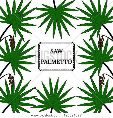 Saw Palmetto (Serenoa repens) in color. Hand drawn botanical illustration. Medicinal tree. Decorative border square banner.