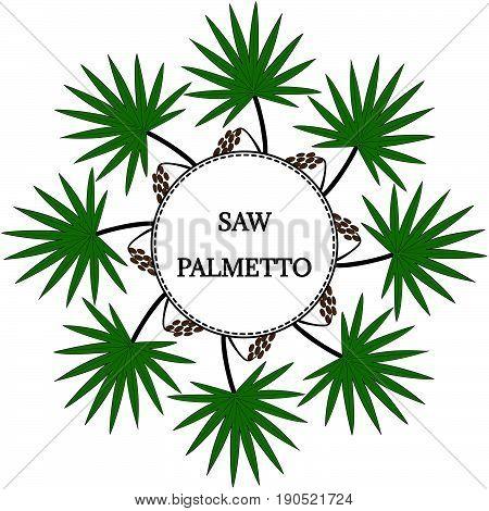 Saw Palmetto (Serenoa repens) in color. Hand drawn botanical illustration. Medicinal tree. Decorative border banner round frame.