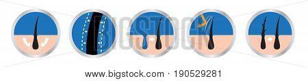 hair logo set vector , 9 icon / skin uv include