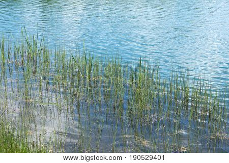 River Lake Side With Weed Grass In The Light Shinning Water
