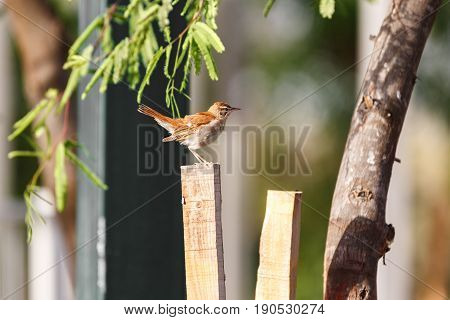 Small brown bird on a blurred background