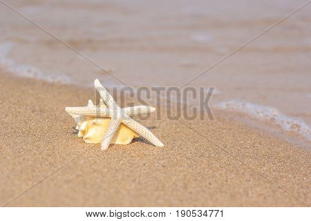 Starfish and sea shell on golden sand beach shore near the sea ocean with selective focus.