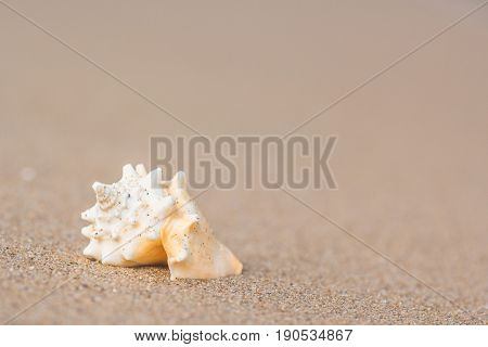 Sea shell on golden sand beach shore near the sea ocean with selective focus.