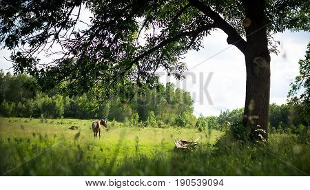 Rural landscape. A horse grazes under a tree next to a cart.