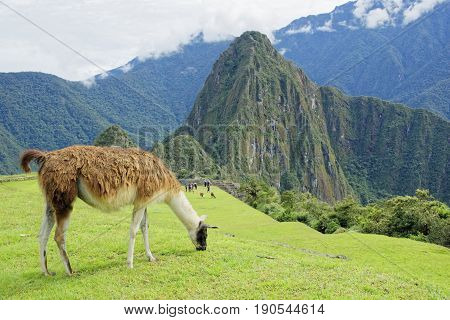 Trekking in one of the wonder of the world Machu Picchu Cusco Peru
