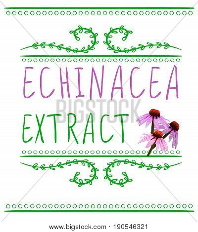 Echinacea purpurea extract VECTOR sketch. Hand drawn packaging label. Pink and green isolated on white