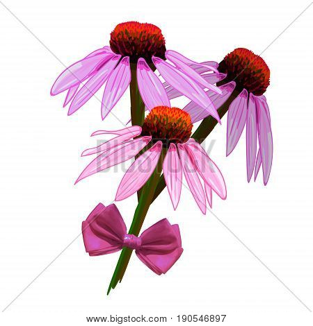 Echinacea purpurea VECTOR sketch. Hand drawn illustration. Pink flowers and realistic pink bow isolated on white background.