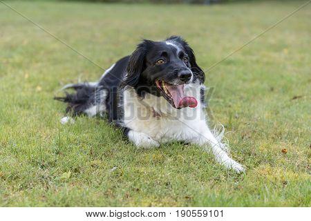 Friendly Cross Breed Dog On Grass