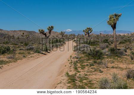 Dirt Road Cuts Diagonally Across Joshua Tree