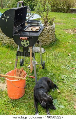 Black dog guarded tasty meat on grill