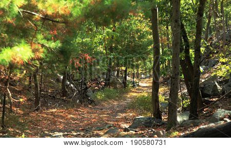 Autumn fall forest with pathway in Massachusetts