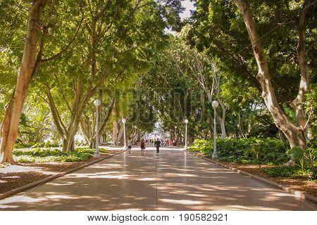 Australia Sydney Hyde Park Walking Nature Trees