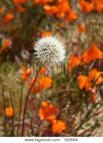 Singular Bloom