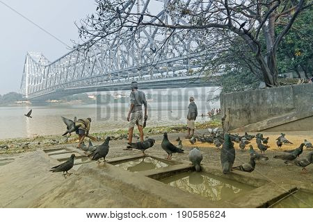 KOLKATA WEST BENGAL / INDIA - FEBRUARY 13TH : Pigeons bathing and drinking water at Mallik Ghat or Jagannath ghat flower market in Kolkata on 13.02.16. It is one of Biggest flower markets in Asia.