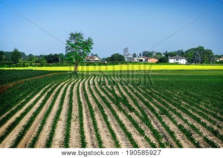 Landscape with the image of a  field in a north Italy