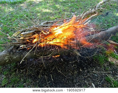 Bright orange bonfire from dry branches in a meadow. Spurts of flame against the background of green grass