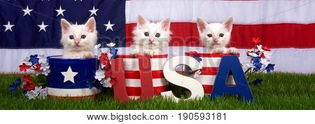 Three fluffy white small kittens sitting in patriotic designed pots on green grass American flag in background USA blocks in front. Banner format for social media use.