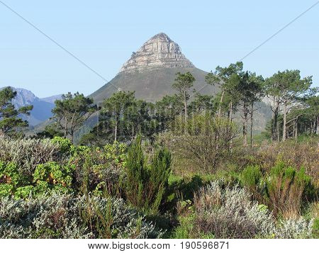 FROM CAPE TOWN, SOUTH AFRICA, TREES AND OTHER VEGETATION IN THE FORE GROUND, WITH SIGNAL HILL IN THE BACK GROUND 24lkij