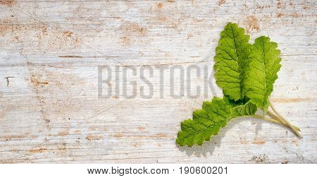 Frame From Three Green Primula Leaves On A Wooden Background With Copy Space