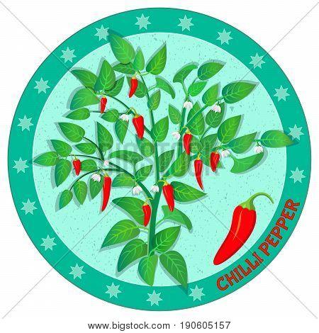 Chilli pepper plant. Organic vegetable product. Design label. Vector illustration.