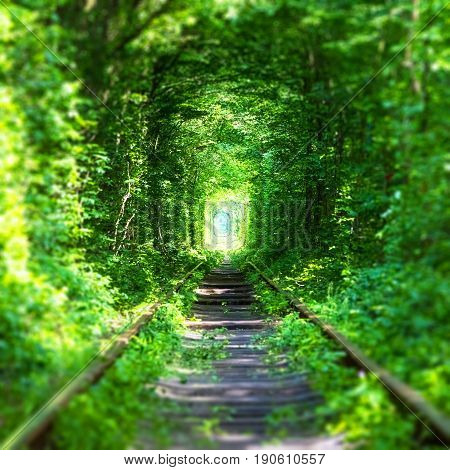 Famous 'Tunnel of Love' landmark in Klevan, Rivno Region, Ukraine - railway track in a deep forest with green trees and grass