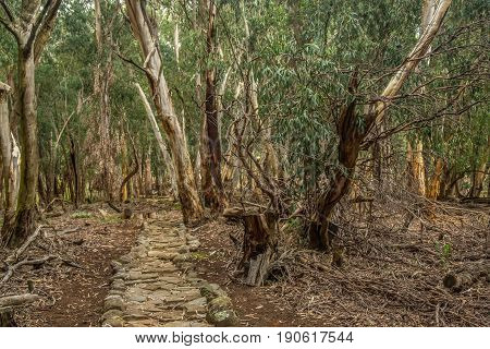 Woodlands of the Drakensberge at the Mkhomazi Wilderness area in South Africa