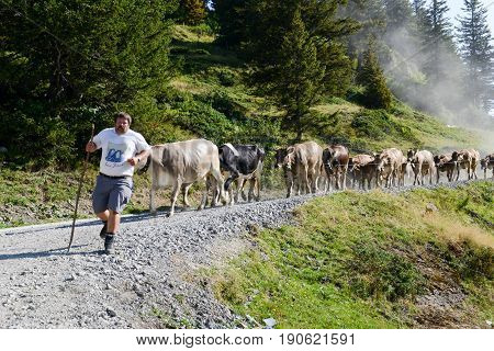 Engelberg, Switzerland - 13 August 2015: Farmer in front of his herd of cows at Truebsee over Engelberg on the Swiss alps