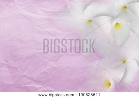 Wrinkled sheet paper pink right flower and left side empty space for text background