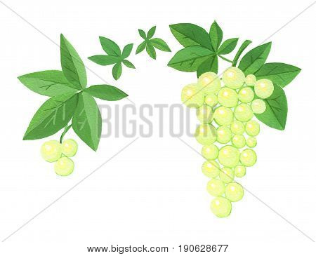 Two stylized clusters of grapes with leaves isolated on white background. Gouache