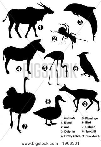 Nine Detailed Vector Silhouettes Of Wildlife Species