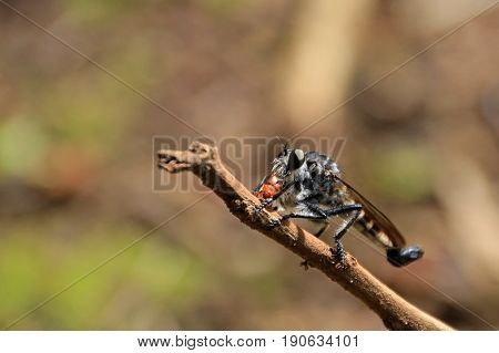 Undefined insect, wasp, fly or flying ant rest on trunk, Nicaragua, Central America
