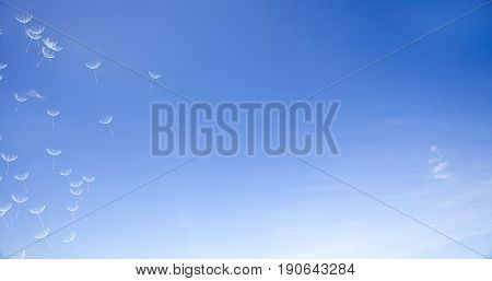 3D Rendering Of Dandelion Blowing Silhouette. Flying Blow Dandel